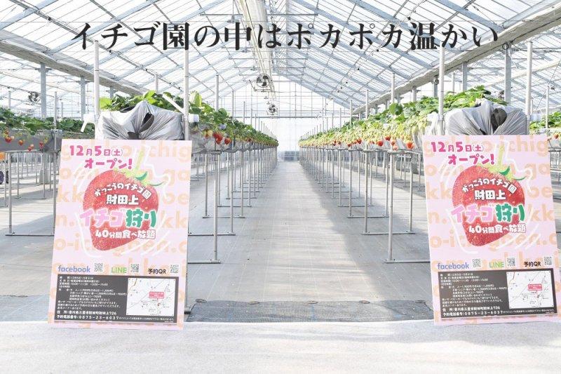 四国Kubota 学校のイチゴ園